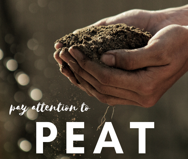 Pay Attention to Peat!